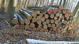 Stammholz Buche Preis : stammholz brennholz polterholz buche eiche inkl lieferung nur hessenweit eur 47 00 ~ Orissabook.com Haus und Dekorationen