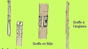 Porte greffe le secret des arbres fruitiers for Maison en tronc d arbre 11 porte greffe le secret des arbres fruitiers