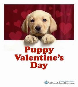 Cute Happy Valentines Day With Dogs Dog Pictures For ...