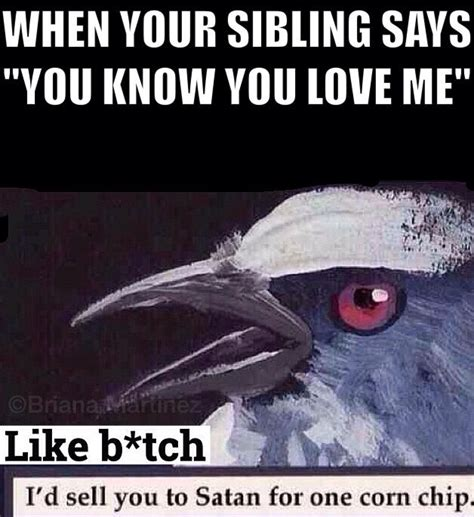 Funny Sibling Memes - 25 best ideas about sibling memes on pinterest funny but true true memes and funny menes
