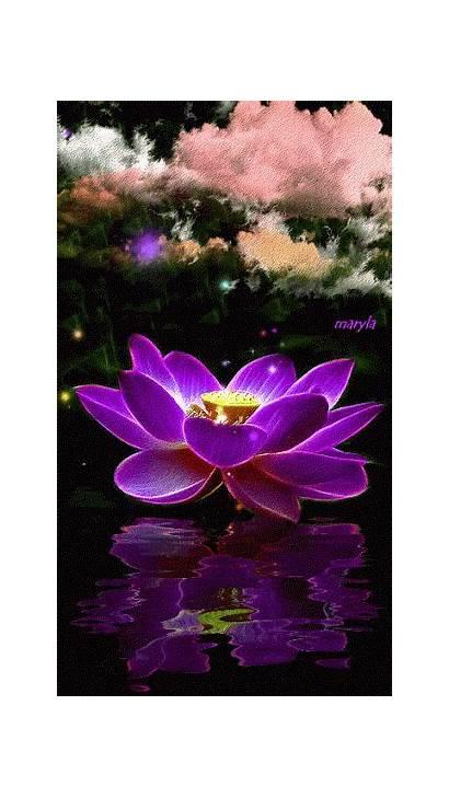 Flowers Google Flower Tenor Pretty Damiana Plus