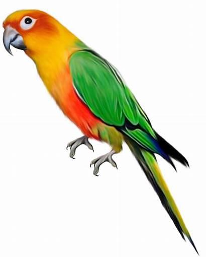 Parrot Clipart Birds Transparent Yopriceville