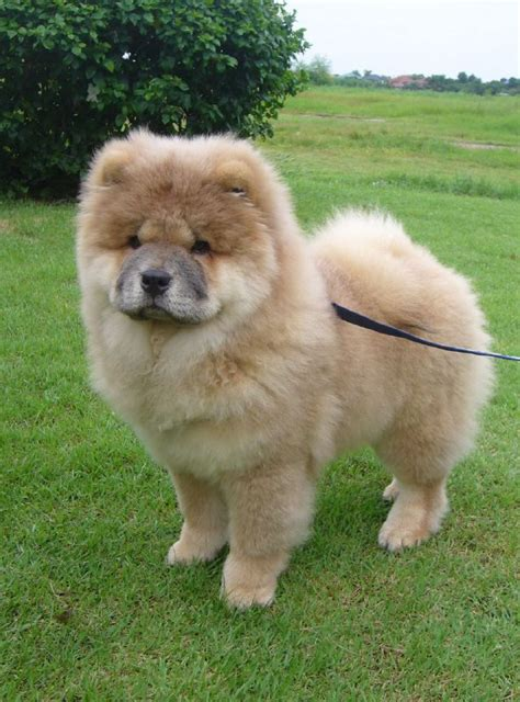Low Shedding Dogs In India by Best Breeds In India Pet Photos Gallery Nwmknwy27o