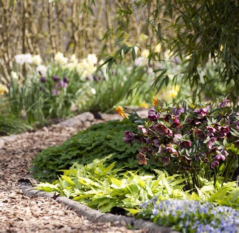 Pilze Im Gartenbeet by Wie Bekomme Ich Pilze Im Rasen Weg Top Blumenwiese C