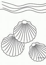 Coloring Coquillage Coloriage Conchas Dibujos Colorear Seashell Mar Shell Dessin Shells Sea Printable Marinas Coloriages Pintar Muschel Nature Clipart Colouring sketch template