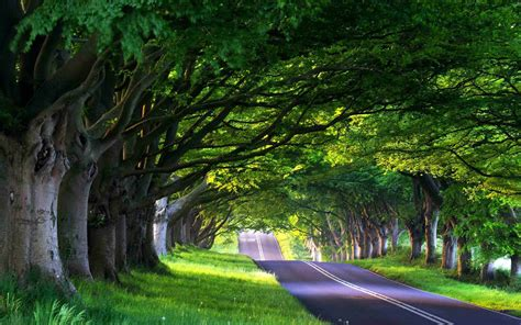 Green Tree Hd Wallpaper by Green Tree Cover The Road Beautiful Nature Hd Wallpapers