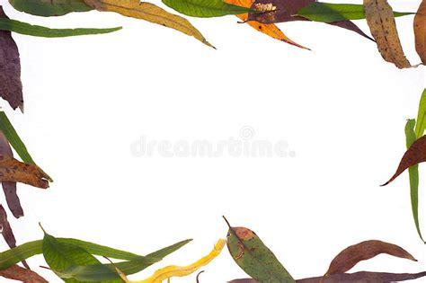 gum leaf border stock image image  background pattern