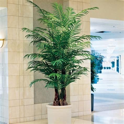 Techniques To Install Artificial Outdoor Plants & Trees  Blog. Most Popular Colors For Living Rooms. White Curtains For Living Room. Photo Of Living Room Decorating. Asian Paints Wall Colours For Living Room. Green Colour Scheme For Living Room. Grey Blue Orange Living Room. Track Lighting Ideas For Living Room. Decorative Trees For Living Room