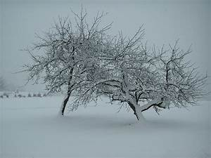 Bäume Im Winter : file b ume im winter 2 jpg wikimedia commons ~ Eleganceandgraceweddings.com Haus und Dekorationen