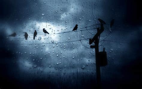 anime girl rain iphone wallpaper the birds in the rain hd wallpaper animals wallpapers