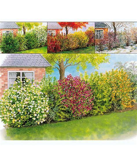Garten Pflanzen Jahreszeit vier jahreszeiten hecke b 228 ume str 228 ucher bakker