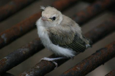 caring for a wild baby bird thriftyfun