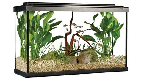 7 conseils principaux pour d 201 corer un aquarium trucs et conseils sur les aquarium pour la maison