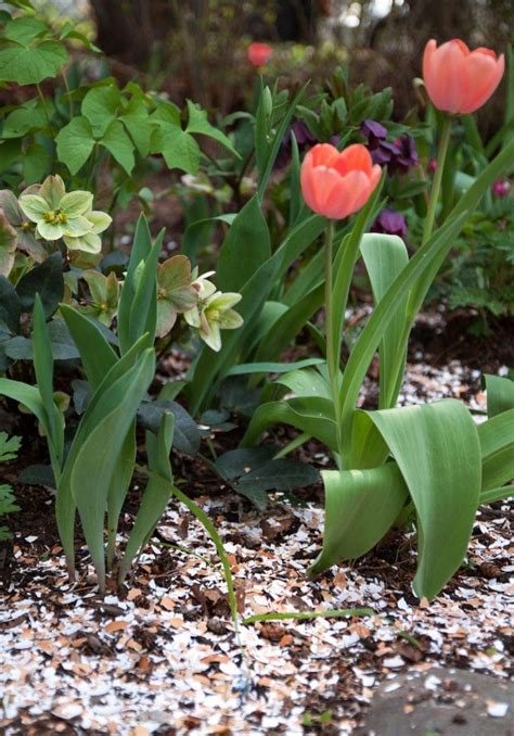Eggshells In Garden by Gardening 101 How To Use Eggshells In The Garden Gardenista