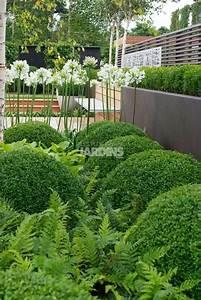 les 25 meilleures idees de la categorie les fougeres sur With idee amenagement petit jardin 16 jardins de babylone paysagiste mur vegetal interieur