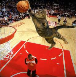 cat a basketball match cat pictures