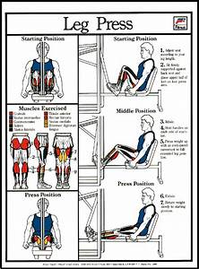 Nervous System Anatomical Chart Leg Press Machine Poster Clinical Charts And Supplies