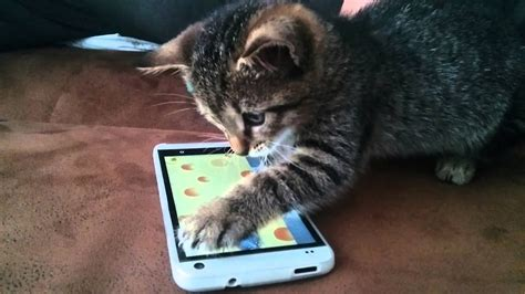 cat plays  smartphone youtube
