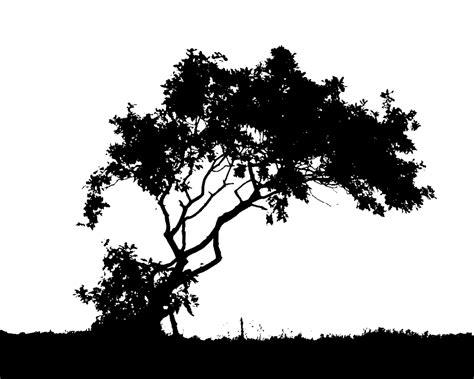 Tree Wallpaper Clipart by White Tree Silhouette Wallpaper Wallpapersafari