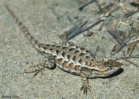 Backyard Reptiles by Pin By The Garden On Backyard Reptiles