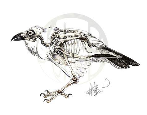 Common Raven Skeleton On Behance