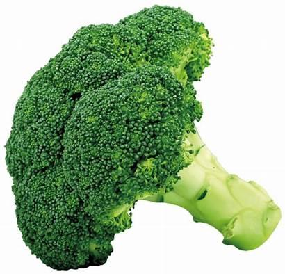 Broccoli Clipart Vegetables Transparent Yopriceville Previous