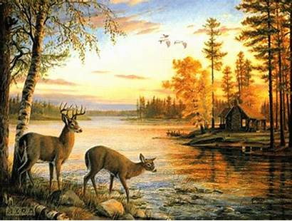 Deer Autumn Fall Animals Forest Wildlife Paintings