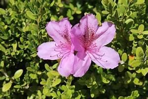 Welche Pflanzen Sind Für Hunde Giftig : achtung giftig welche zimmerpflanzen sind gef hrlich f r hunde und welche nicht pawshake blog ~ Watch28wear.com Haus und Dekorationen