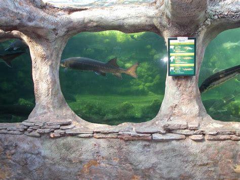 parc aquarium du p 233 rigord noir parc le bugue