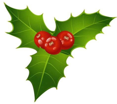 mistletoe is a tradition for mistletoe is a tradition for christmas in many countries it is also traditional to kiss