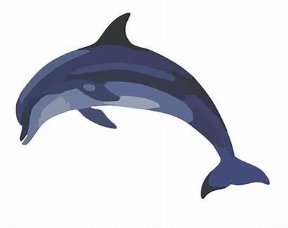 Dolphin Bottlenose Clip Animal Vector Graphic Clipart