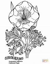 Coloring Poppy California Pages Printable Poppies Colorings Drawing Domain Dot Wildflowers Celebrating Categories sketch template