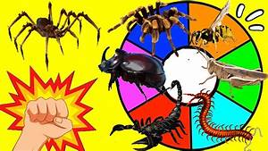 ruleta de los animales invertebrados