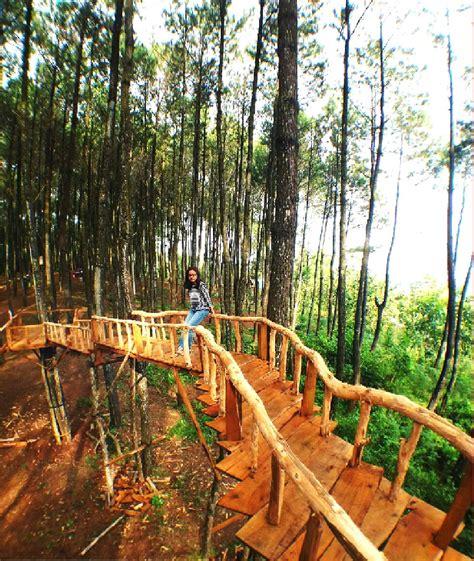 wisata malam  hutan pinus pengger romantisnya kota