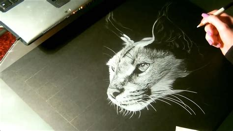Dessin Sur Papier Noir Speed Drawing Animal Caracal Dessin Sur Papier Noir