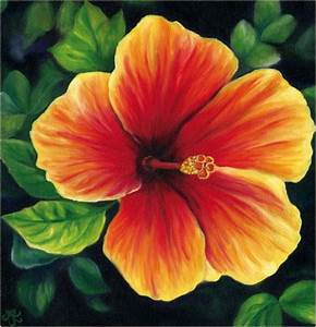 Oil Paintings of Tropical Flowers by Anna Keay Fine Art ...