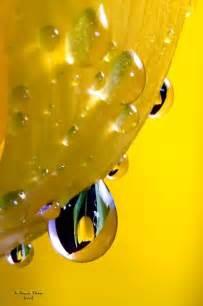 Yellow Dew Drops