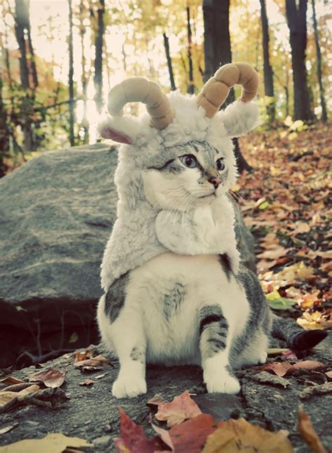 halloween cat costumes cutest cute cats kittens goat kitty ram funny terrifying costume animals adorable baby narnia top13 goats clothes
