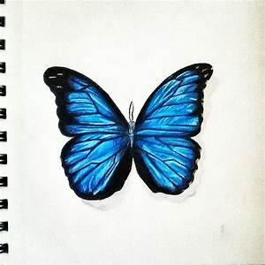 butterfly art drawing blue on Instagram