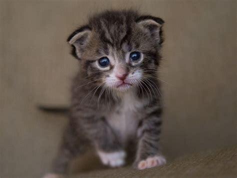 puppies  kittens  cute   neuter  cuter