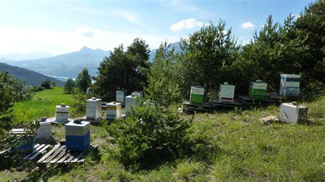 galerie cat 233 gorie apiculture location de chalets aux orres