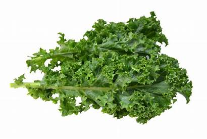 Kale Vegetables Bad Calcium Nutrition Rich Healthy