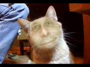 Cat with Human Face - YouTube