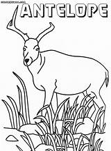 Antelope Coloring Pages Colorings sketch template