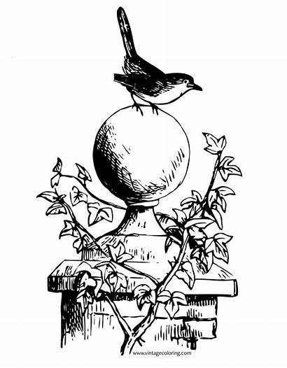 Coloring Pages Redbreast Robin Clipartmag Freely