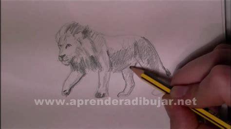 dibujos de leones como dibujar  leon  lapiz youtube