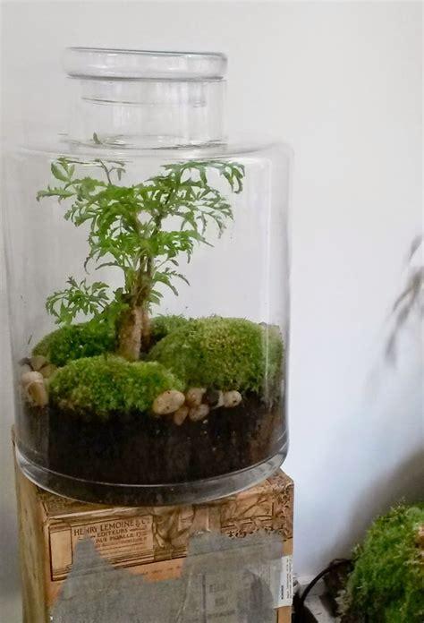 comment faire un aquarium plante bocal plante teciverdi