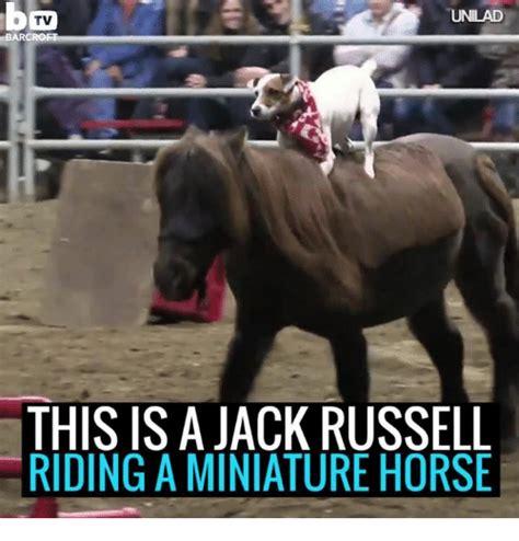 Horse Riding Meme - 25 best memes about miniature horse miniature horse memes