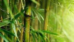 Wie Schnell Wächst Bambus : bambus garten ratgeber ~ Frokenaadalensverden.com Haus und Dekorationen
