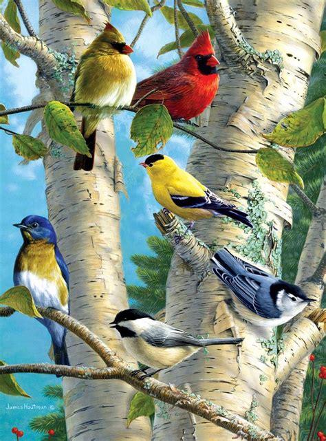 songbirds 03 bird watching pinterest